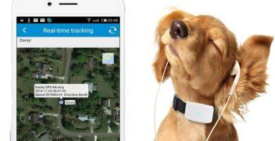 gps paara perros con wifi